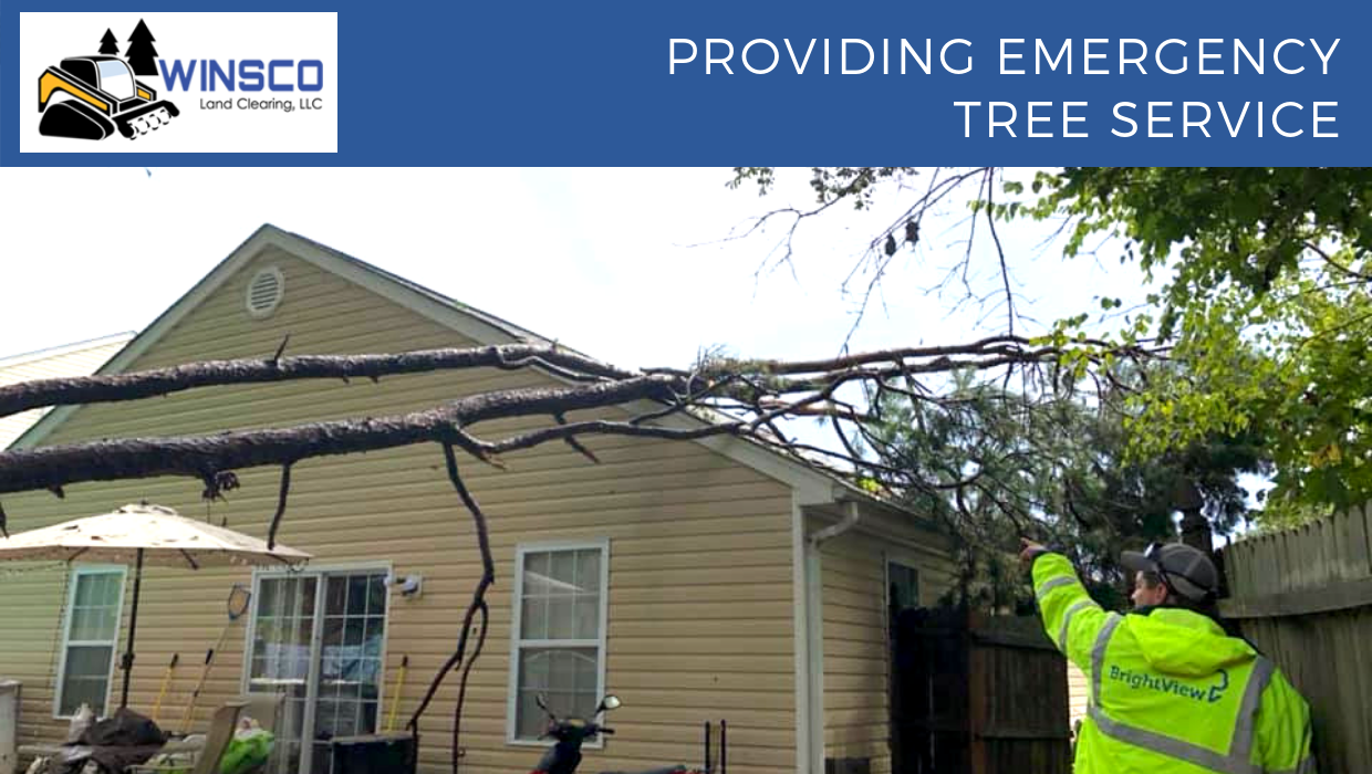 Do You Need Emergency Tree Service?