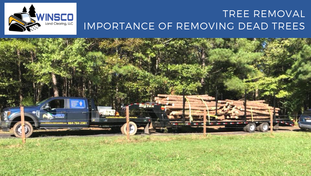 Tree Removal – Importance of Removing Dead Trees