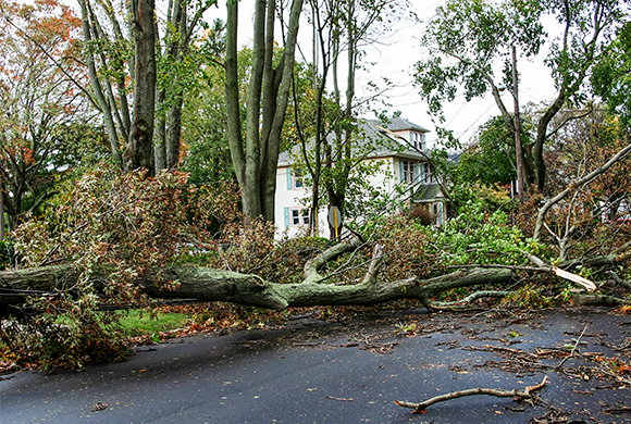 Storm Clean Up Company / Tree Removal Service