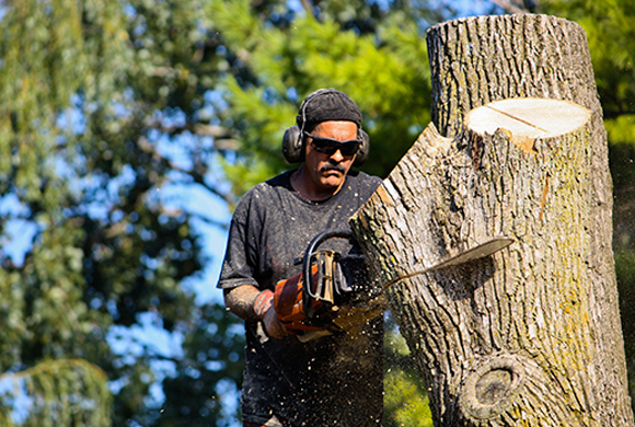 Tree Removal Service Greenville